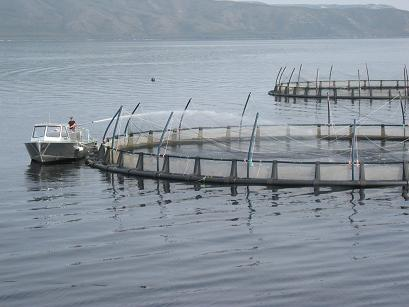 Macquarie Harbour salmon farm