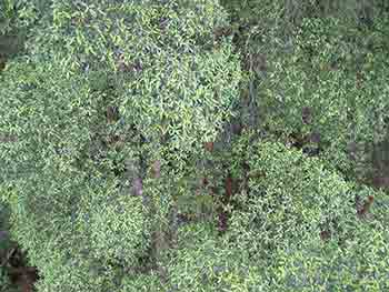 Tahune Airwalk view of treetops