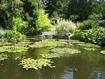 Royal Tasmanian botanical gardens lily pond