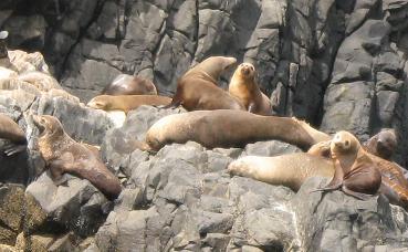 seal colony off Bruny island