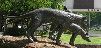 Tasmanian tiger statue - outside Launceston library