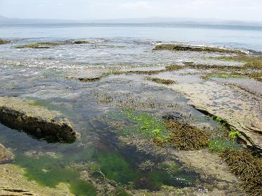 Maria Island - Painted cliffs marine life