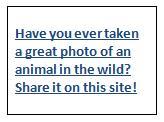 Your Best Wildlife Shot